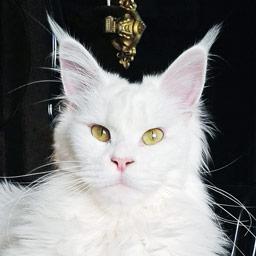 Корм Эдванс для собак и кошек ADVANCE